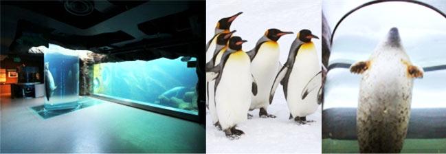 旭山動物園画像